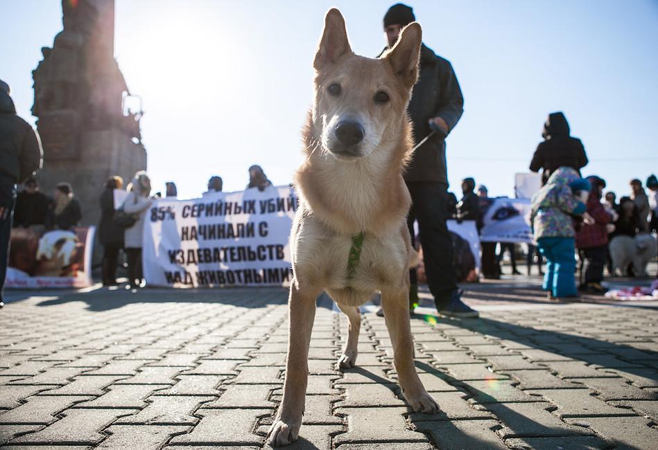 «Зоозащита вРоссии отстает отмира на200лет»