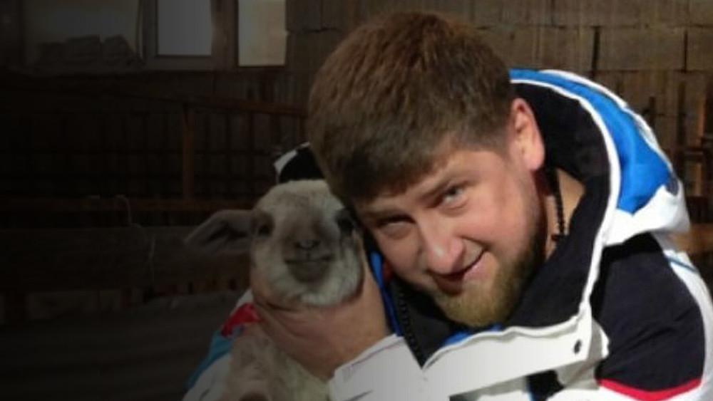 ВАдыгее пропали 600 жертвенных животных, которых Рамзан Кадыров подарил неимущим