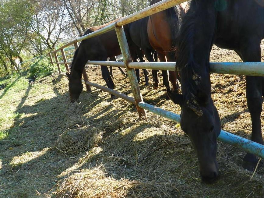 «Вот оно, достояние!» ― Русская порода лошадей может исчезнуть