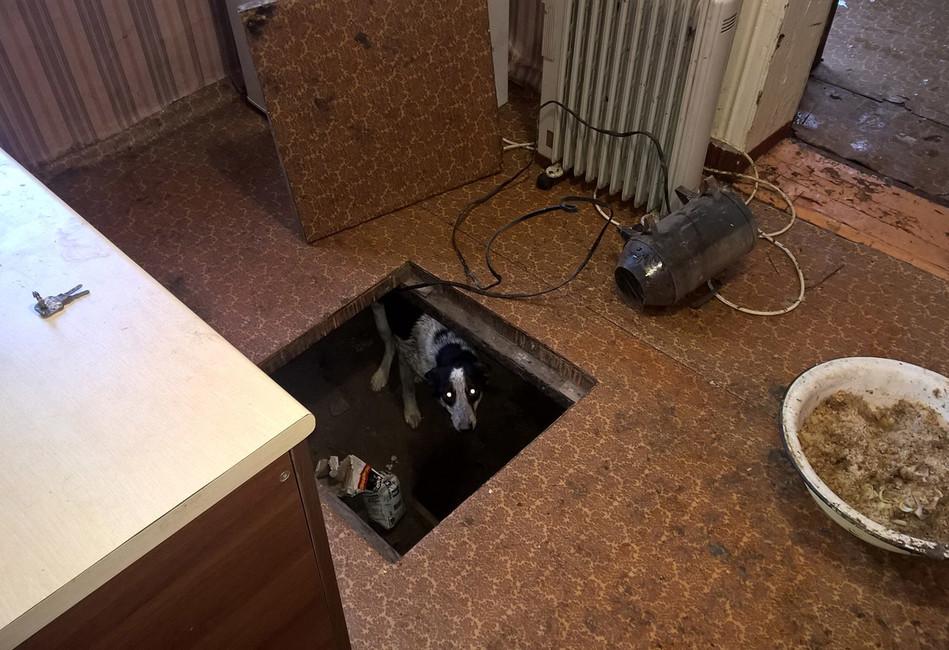 Волонтеры нашли вКрасноярске гостиницу для животных, где собак икошек морили голодом, аумерших сжигали впечи