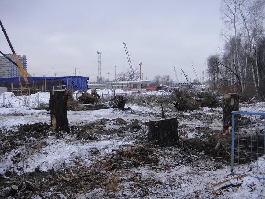 Вырубка парка Кусково. Фото: Вконтакте