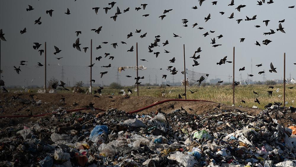 Экологи против «Чистой страны»