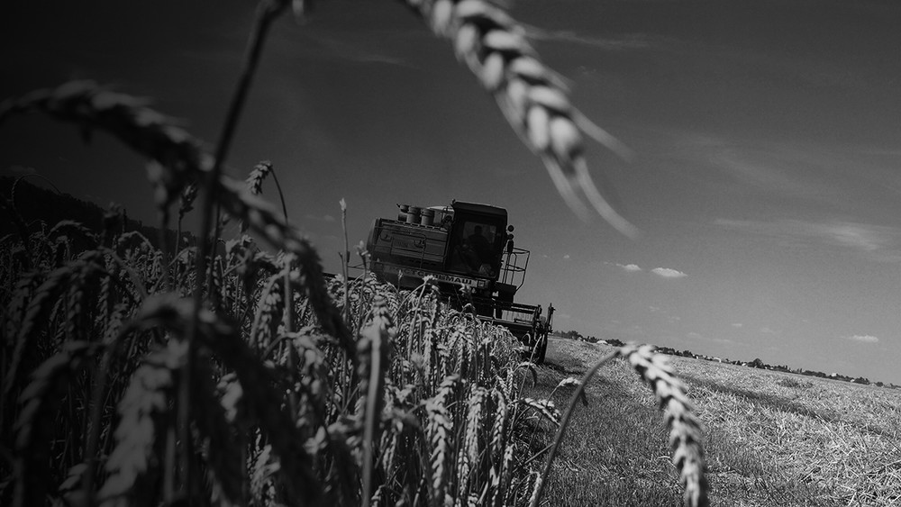Краснодар. Отбирать колхозные земли пришли савтоматами