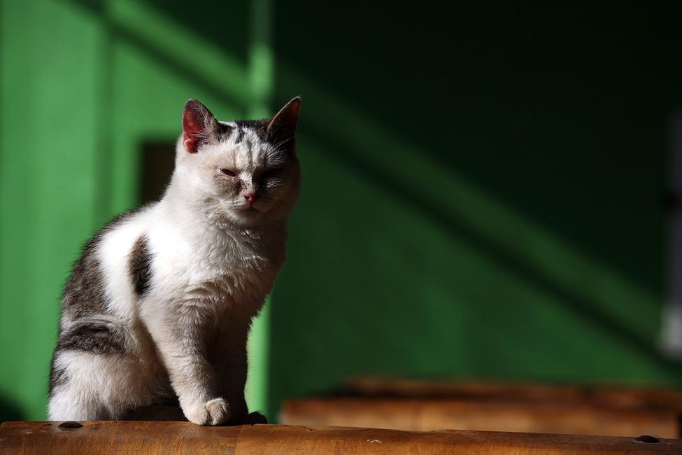 Фото: Кирилл Чаплинский/ ТАСС
