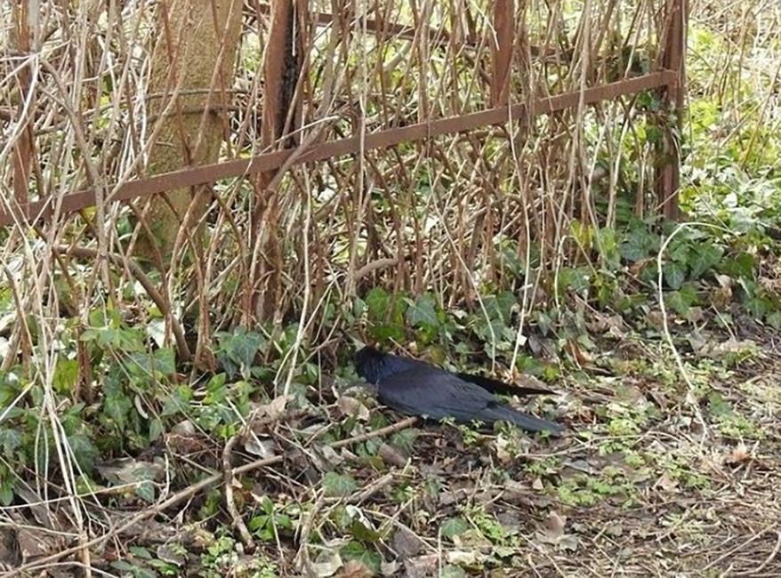 Мертвая птица наВсесвятском кладбище Краснодара. Фото: krasnodarnosti/ ok.ru