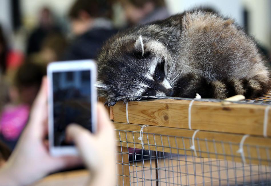 «Нигде такой дикости больше нет». Почему зоозащитников возмущают контактные зоопарки