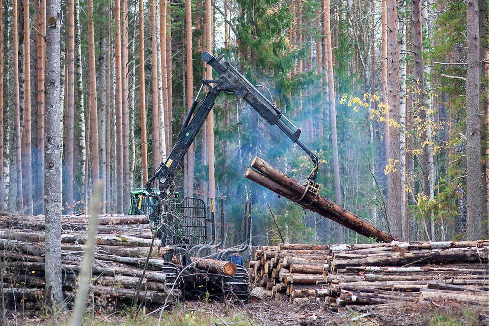 Лесозаготовительная машина компании «Сатурн Нордстрой» вCунском бору. Фото: Игорь Подгорный/ ТАСС