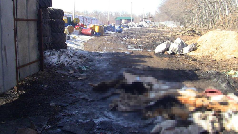 Липецк. Сторонник ЛДПР убивает собак забюджетные деньги