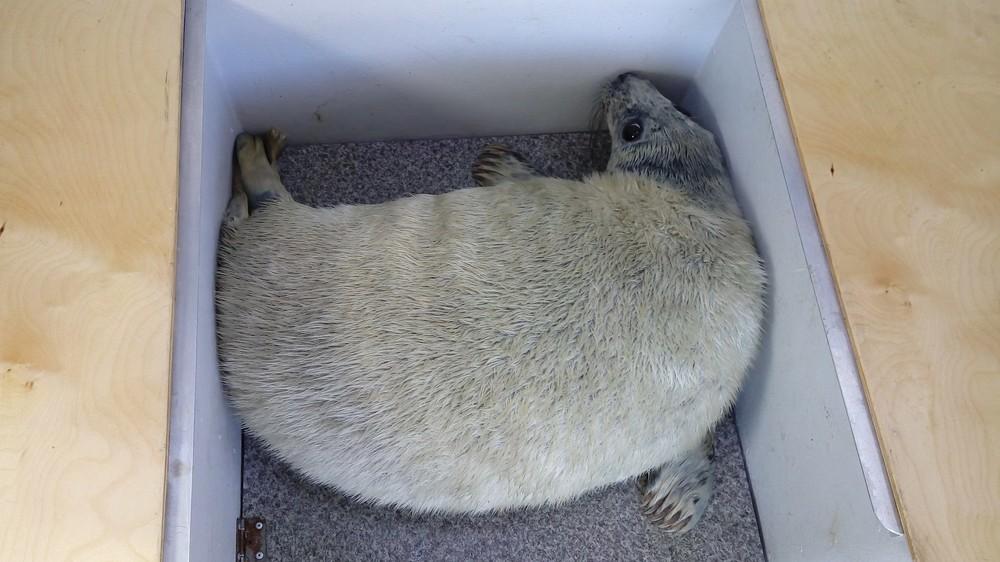 фото: Группа VK\Спасение тюленей 6992399