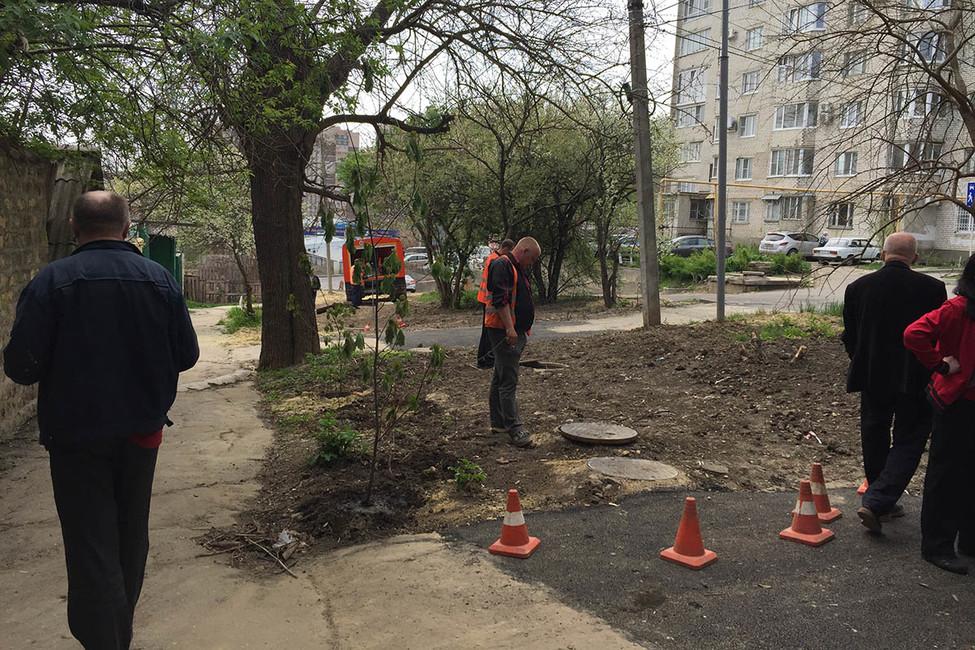 Жители Ставрополя остановили вырубку деревьев, посаженных героями Великой Отечественной войны