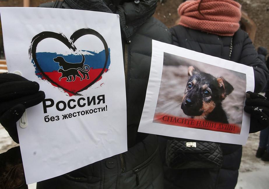 9протестов россиян вэти выходные