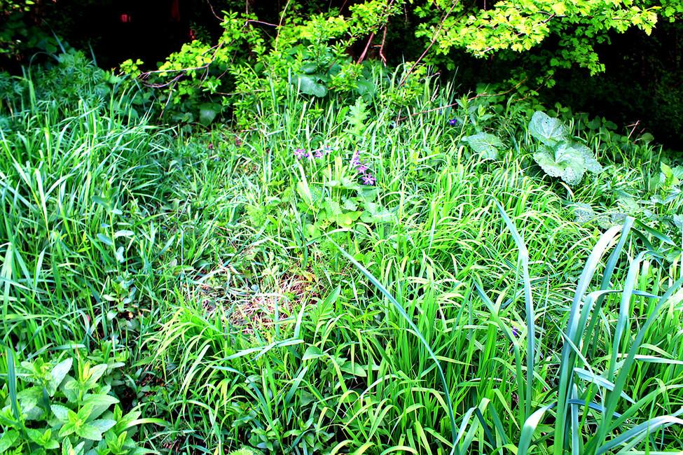 Могила поросла травой. Фото: Лариса Бахмацкая