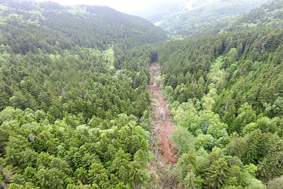 Вырубка леса нагоре Красной. Источник: АСТВ.ru