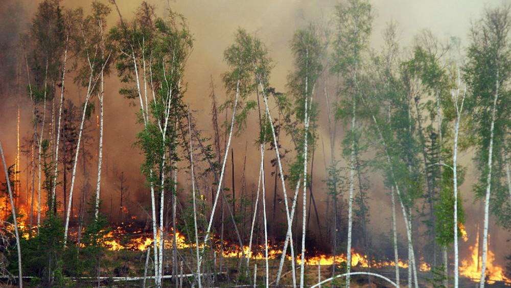 Власти скрыли реальный масштаб пожаров вЮжной Сибири