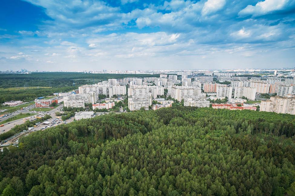 Эксперт Гринпис России: «Половина подмосковных лесов перестанет быть лесом»
