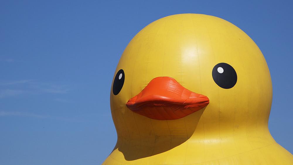 «Меняйте надругих зверей иплывите». Власти Архангельска испугались фестиваля позаплыву резиновых уток