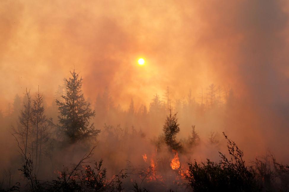 Лесные пожары-2017. Как вРоссии скрывают правду омасштабах бедствия