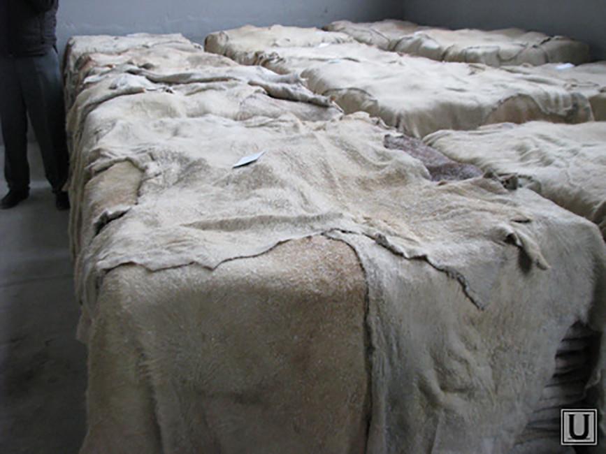 Зловонная Поцелуйка. Кожевенный завод под Курганом уже 7лет отравляет местным жизнь