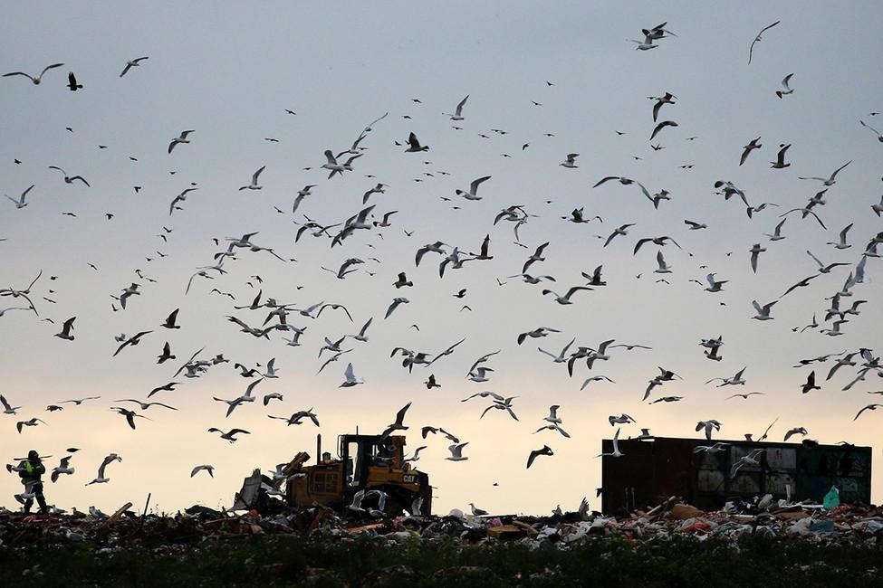 «ВНекрасовке дохнут птицы». Жители юго-востока Москвы требуют закрыть мусоросжигательный завод