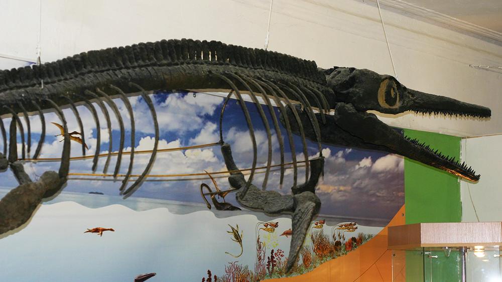 Динозавры вымерли второй раз. Как палеонтолог воюет сМинкультом Ульяновской области засозданный иммузей