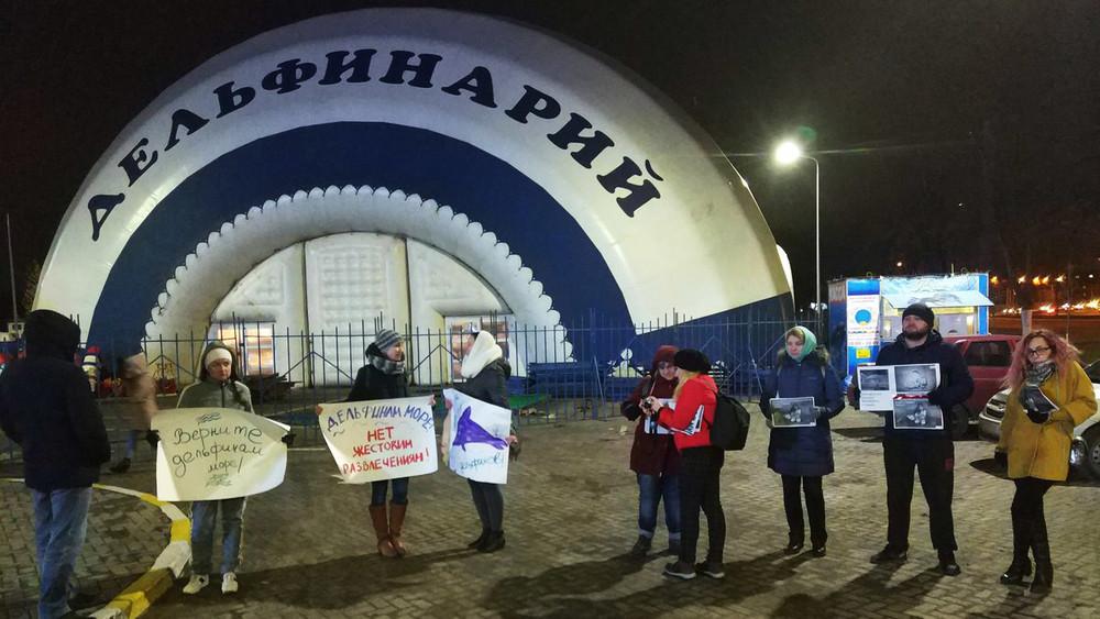ВУльяновске выступили засвободу дельфинов