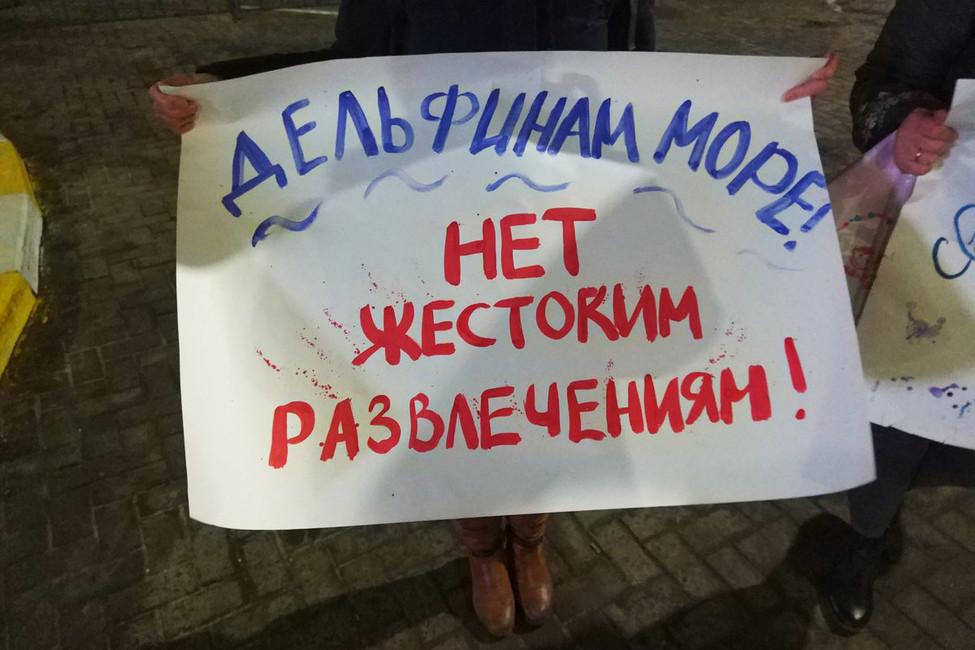 Пикет против передвижных дельфинариев вУльяновске. Фото: Вконтакте