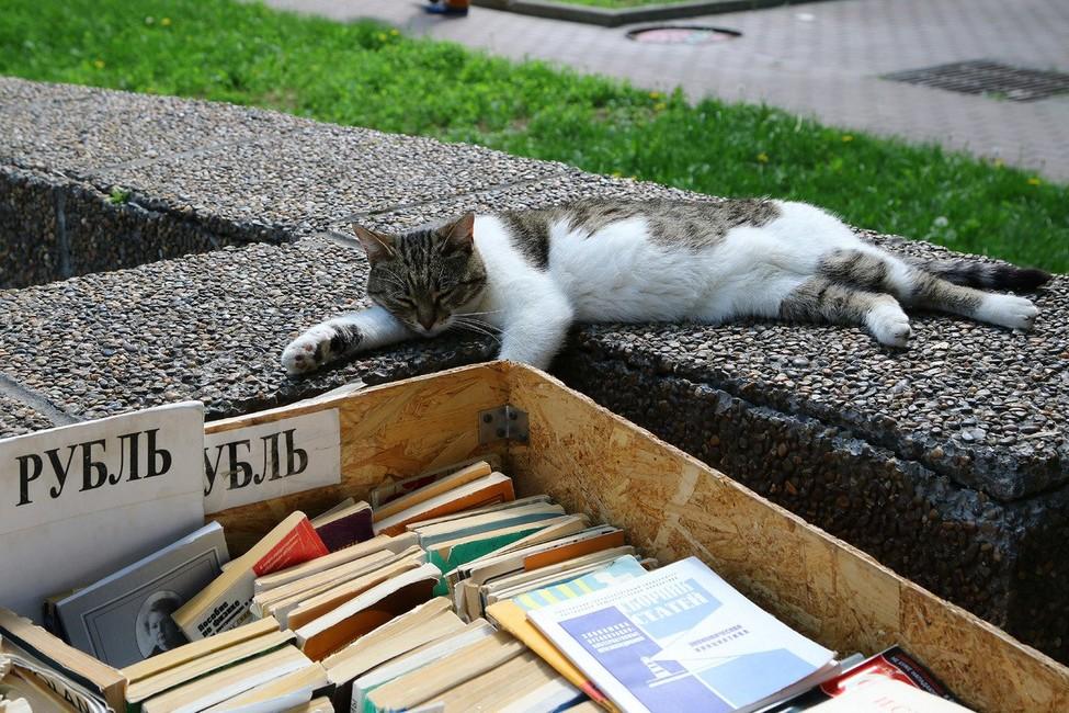 «Множество книг окажутся намусорной свалке». ВРостове-на-Дону закрывают книжный развал средкой инедорогой литературой