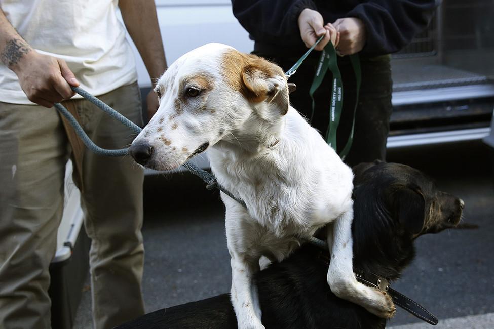 4протеста выходных: взащиту животных ипротив мусоросжигательного завода