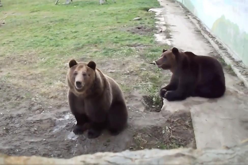 Медведи Умка иТоптыжка. Кадр извидео