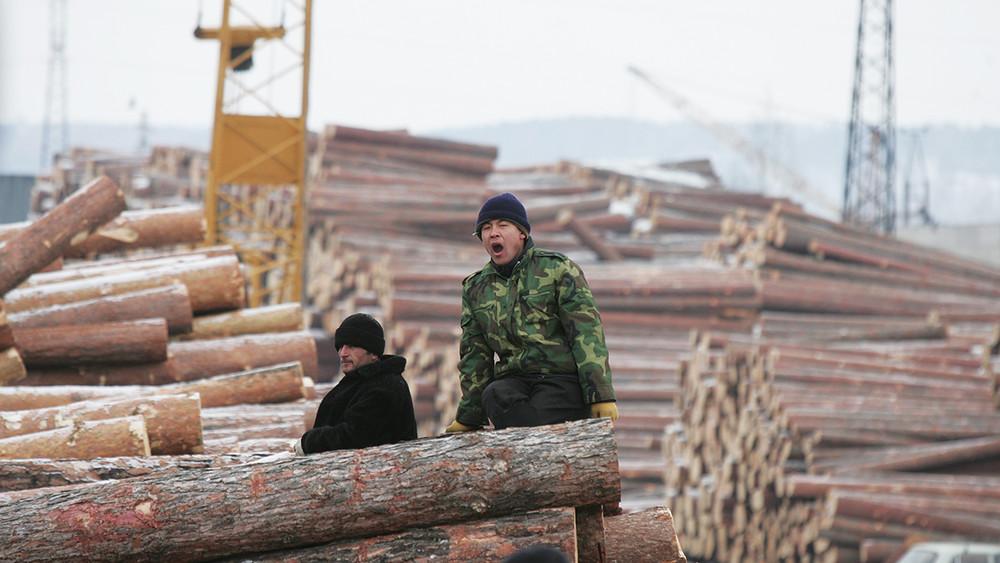 «Теперь, чтобы восстановить экосистему, нужны сотни лет»: как китайские рабочие уничтожают сибирские леса
